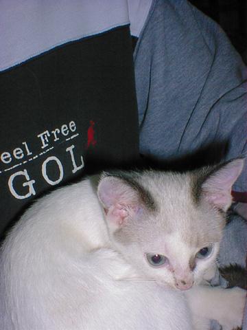 cat20050305_3